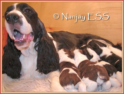 Nanjay puppies