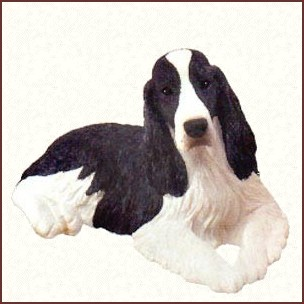 Large English Springer Spaniel